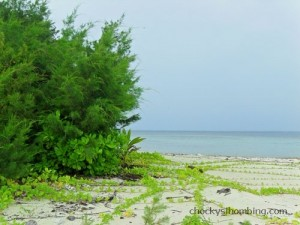 beauty of karimunjawa