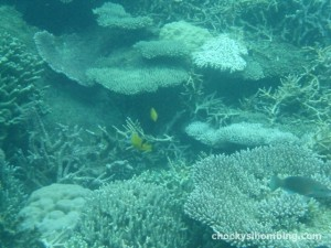underwater of Karimunjawa