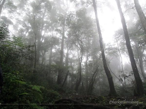 Hutan-Gunung-Gede