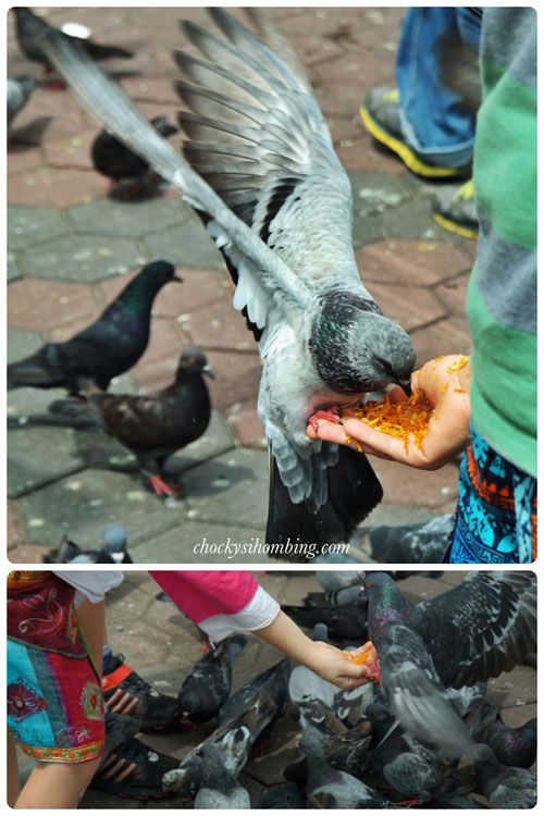feeding-bird-batu-caves