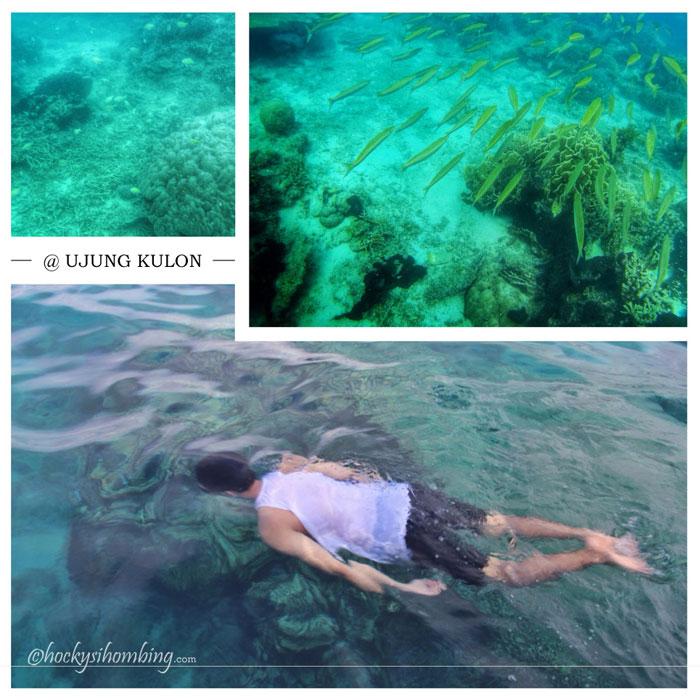 Snorkeling-Ujung-Kulon