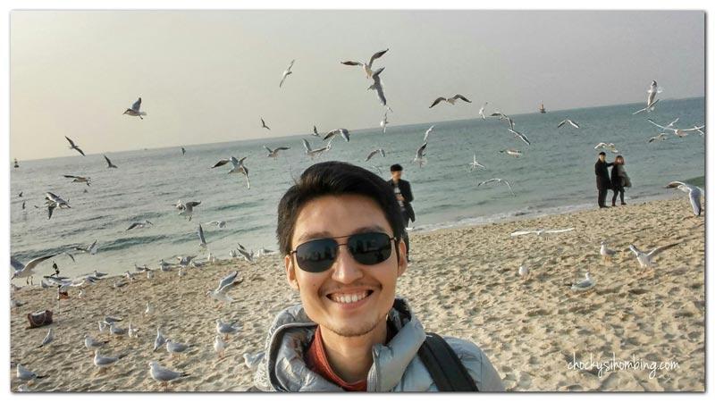 main-burung-di-haeundae-beach-busan
